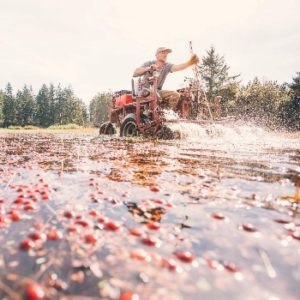 man in tractor harvesting cranberries from bog